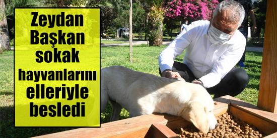 Zeydan Başkan sokak hayvanlarını elleriyle besledi