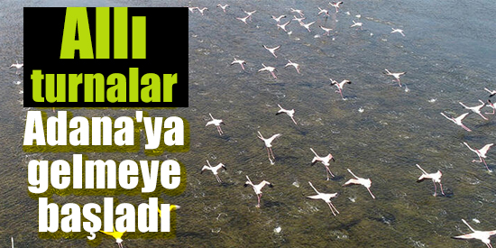 Allı turnalar Adana'ya gelmeye başladı