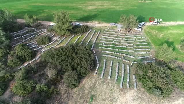 Adana'da milyonlarca arı telef oldu