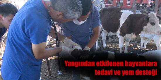 Yangından etkilenen hayvanlara tedavi ve yem desteği
