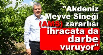 """""""Akdeniz Meyve Sineği (AMS) zararlısı ihracata da darbe vuruyor"""""""